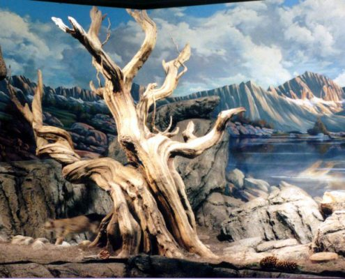 Trees-Tree-Nature-Maker-Naturemaker-Art-Artificial-Fake-Custom-design-unique-best-large-bristlecone-pine-museum