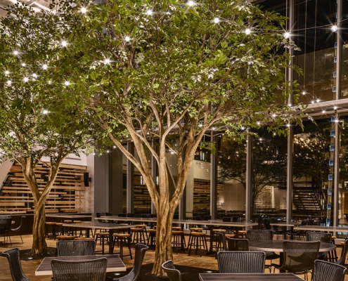 ficus tree in restaurant as centerpiece with lights